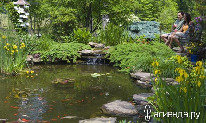 А не завести ли в саду рыбу?