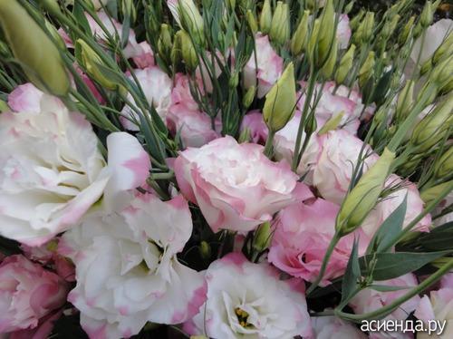 как определить название цветка по фото
