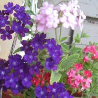 Цветы на балконе. Как всё начиналось.
