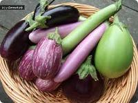 Секреты выращивания баклажан