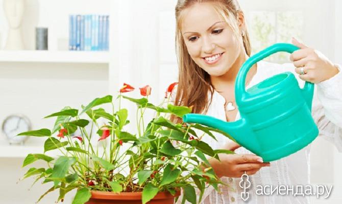 Правильный полив комнатных растений