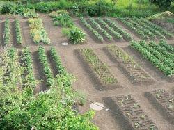 Планировка огорода.