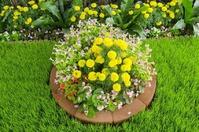 Клумбы и цветники на вашем участке