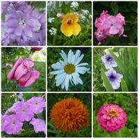 Цветы в июне 2014
