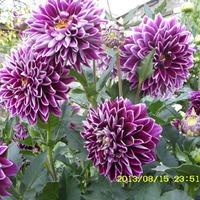 Мои прошлогодние цветы