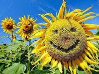 Солнышко в огороде