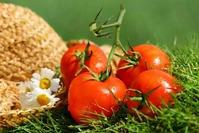 Проблемы при выращивании помидор (Часть 1)