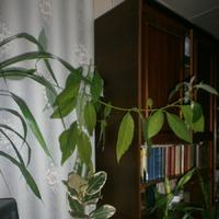 Тропики в квартире)))