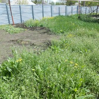 Мой огород - нужна помощь