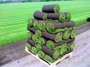 Рулонный газон или газонная трава?