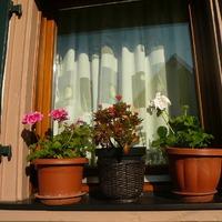 Цветы на подоконнике и под окном)))