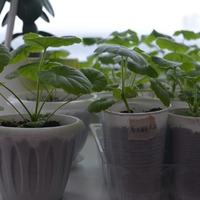 Круговорот цветов в природе или выращивание комнатных растений из семян