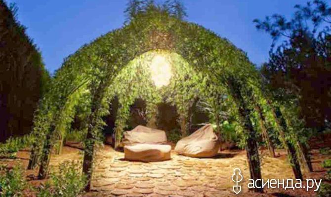 Живая изгородь: для дачи и не только