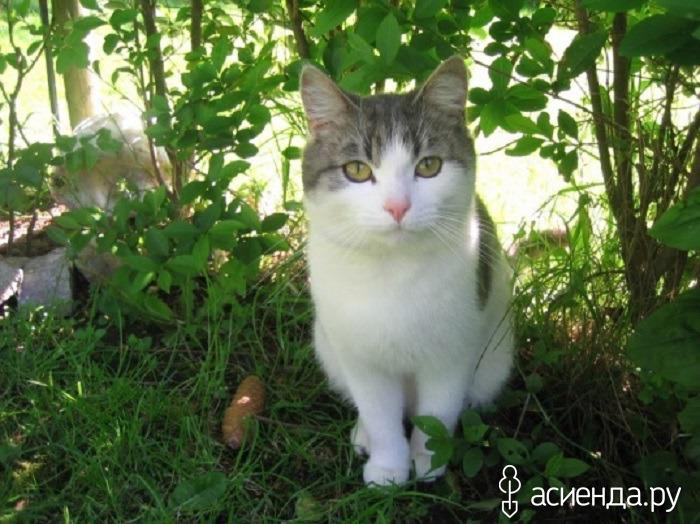 Отпугиватель кошек на участке купить отпугиватель для собак украина