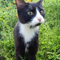 Как защитить грядки от проделок котов