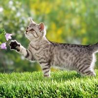 Дачный рацион кошки