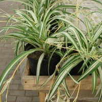 Теневыносливые растения для офиса