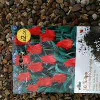 Посадка весенних луковичных цветов