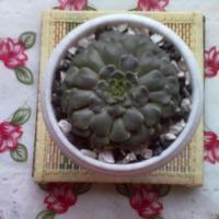 Каменный цветок
