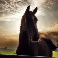 Лошадь - преданный друг человека. Часть 1
