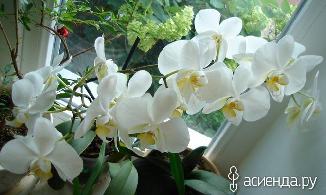 Натуральные удобрения в домашнем цветоводстве. Часть 1