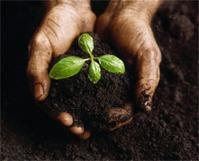 Мифы об органическом садоводстве