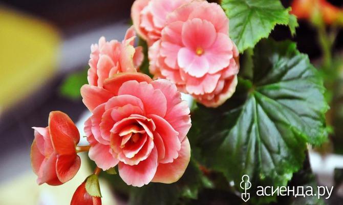 Натуральные удобрения в домашнем цветоводстве. Часть 2