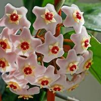 Натуральные удобрения в домашнем цветоводстве. Часть 3