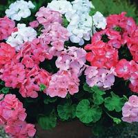 Натуральные удобрения в домашнем цветоводстве. Часть 4