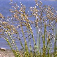 Травы для умеренно влажных мест