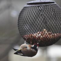 Чем накормить птиц зимой