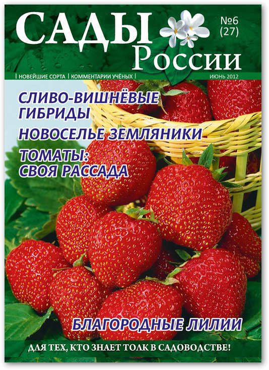 Магазин Сад Огород Каталог Семян
