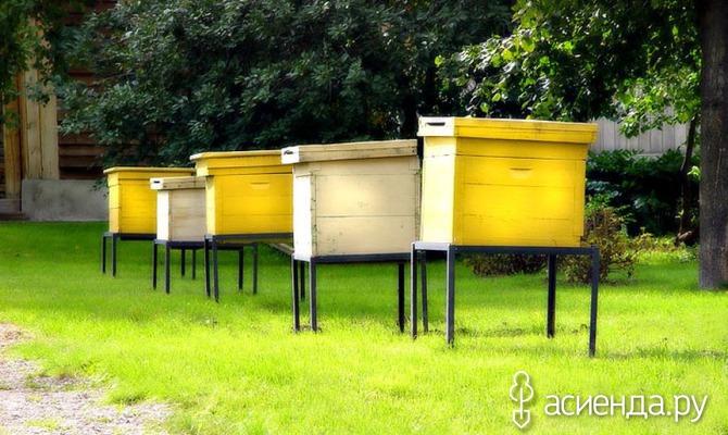 Пчелиное царство. Часть первая
