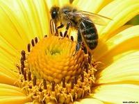 Пчелиное царство. Часть вторая