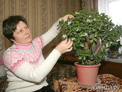 Как красивым сделать денежное дерево
