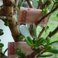 Денежное дерево и прибыль в доме