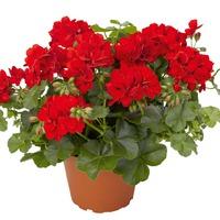 Комнатные цветы для прибыли в доме