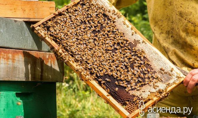 Осмотр пчёл. Пчелиное царство - Часть третья