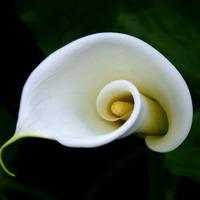 Растения по знаку Зодиака. Часть 2