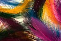 Секреты цветных перышек