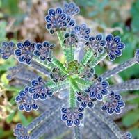 Исцеляющие комнатные растения. Часть 2