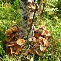 Как вырастить на даче грибы?