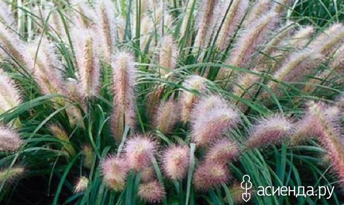Травы для сухих участков