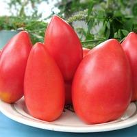 Советы овощеводов для томатов. Часть 2