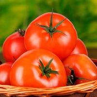 Советы овощеводов для томатов. Часть 1