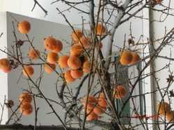 Райские яблоки!