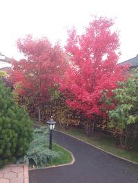 Осень у нас в саду