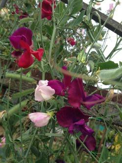 Последние цветы в букетах - октябрьская красотень!!