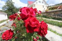 Укрываем розы на зиму. Как правильно?