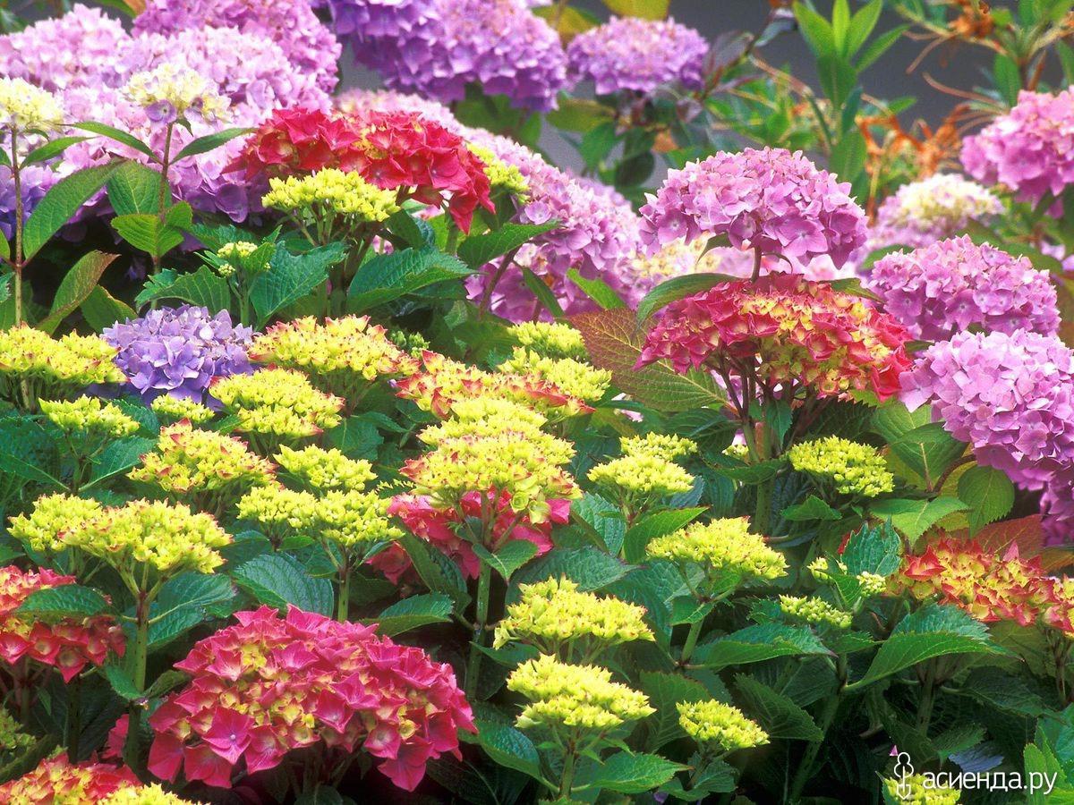 Какие цветы сажать семенами осенью